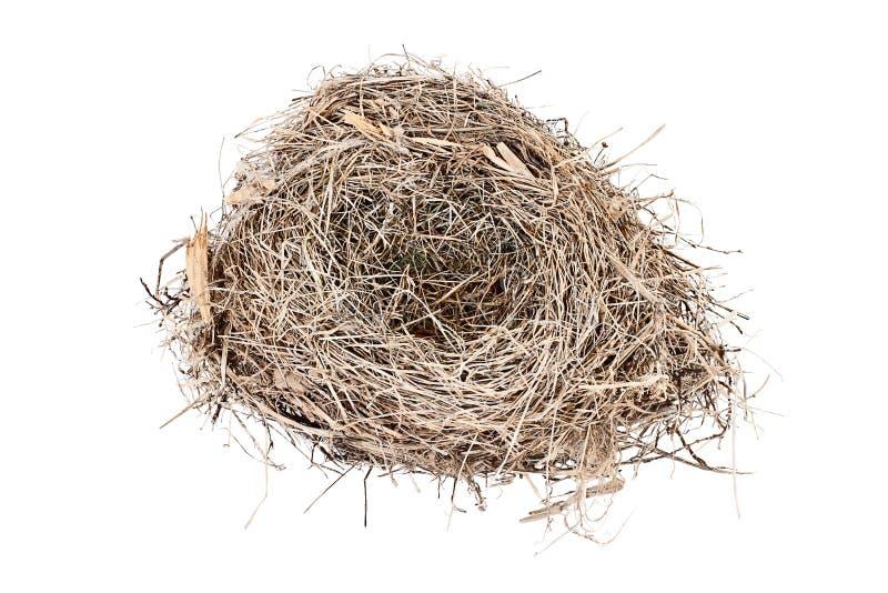 Carolina Wren Bird Nest vide d'isolement photo stock
