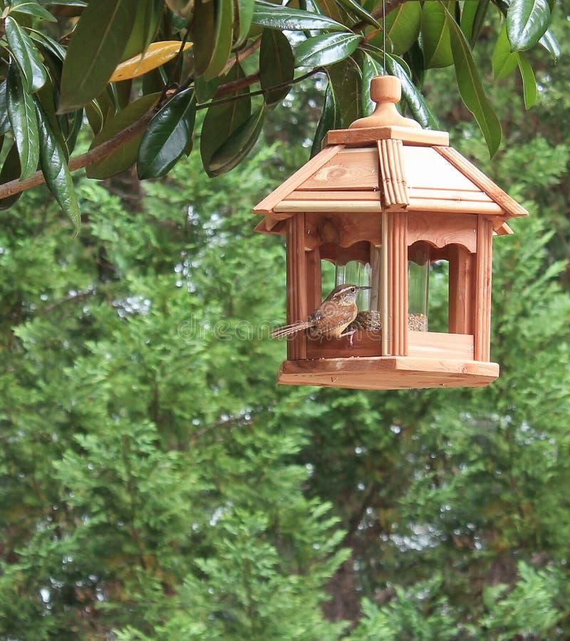 Carolina Wren en alimentador del pájaro imagen de archivo libre de regalías
