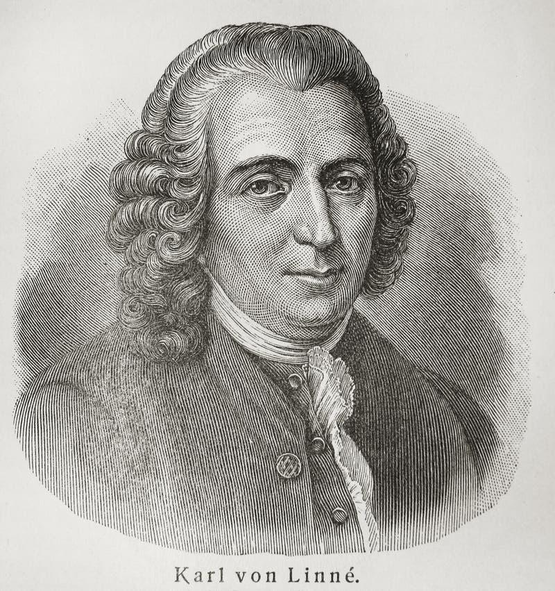 Carolus Linnaeus lizenzfreies stockbild