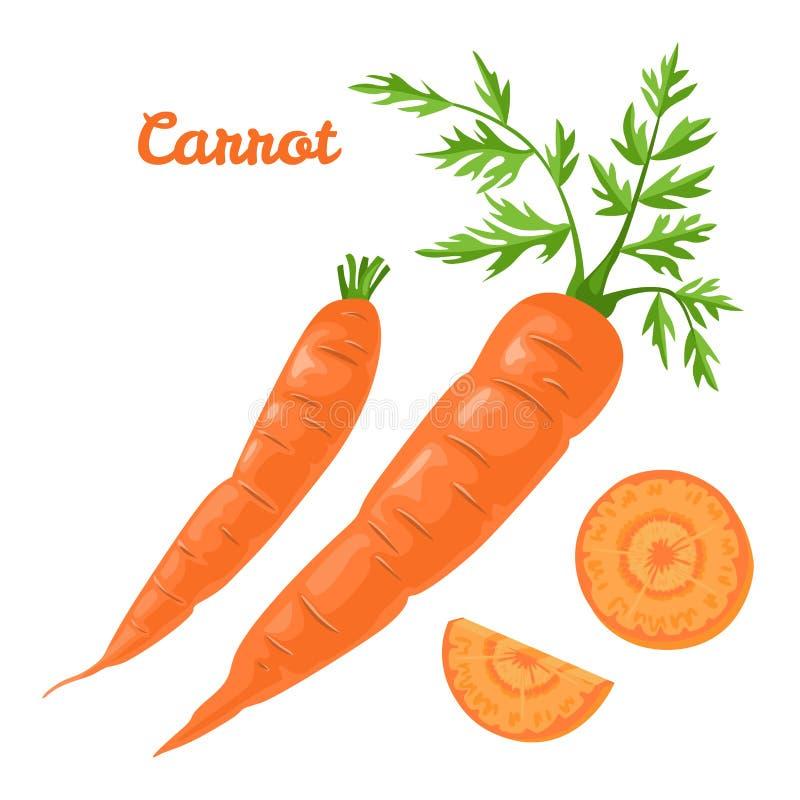 Carota isolata Illustrazione di vettore della verdura fresca e della fetta illustrazione vettoriale