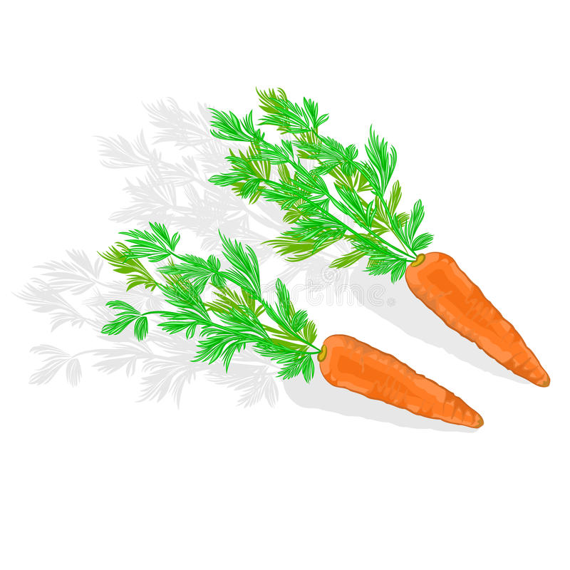 Carote con l'illustrazione di vettore delle foglie royalty illustrazione gratis