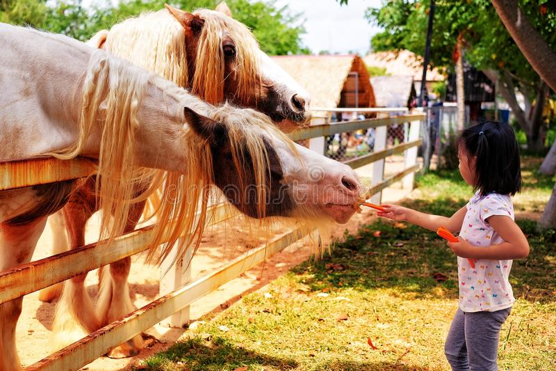 Carote d'alimentazione di una ragazza ai cavalli ad un'azienda agricola in Tailandia immagini stock libere da diritti