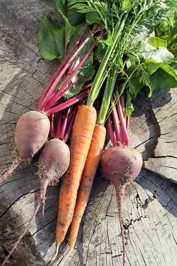 Carote e barbabietola organiche fresche fotografie stock libere da diritti