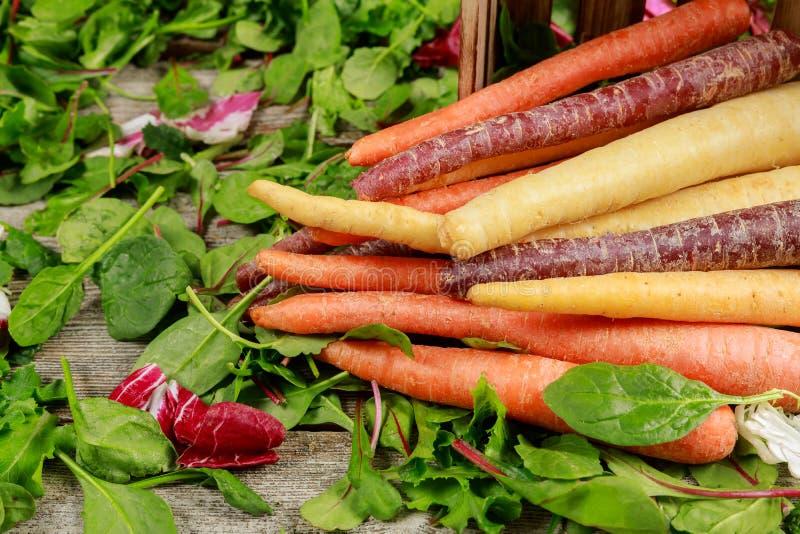 Carote multicolori organiche differenti nell'insalata verde mista fresca sulla tavola di legno fotografie stock