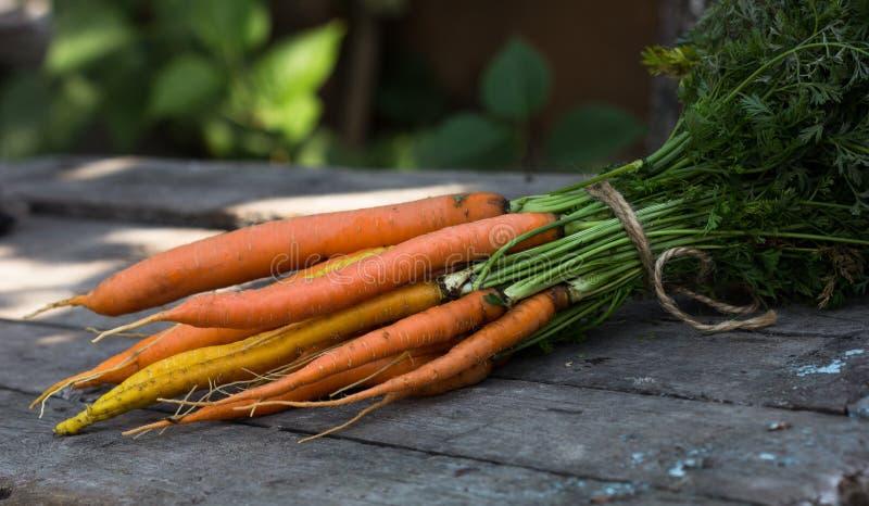 Carote pulite fresche su una tavola bianca Fondo della vista superiore degli ortaggi freschi Mazzo fresco di carote su fondo bian fotografia stock