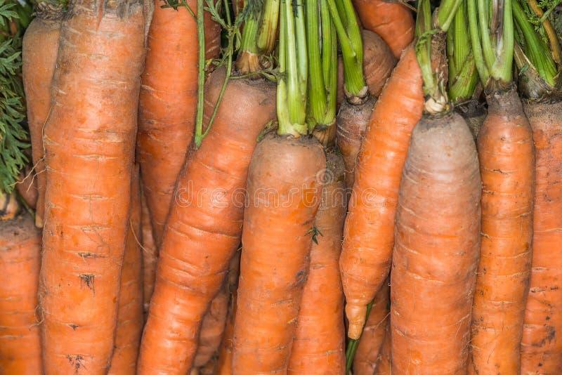 Download Carottes du jardin image stock. Image du normal, centrales - 77156635