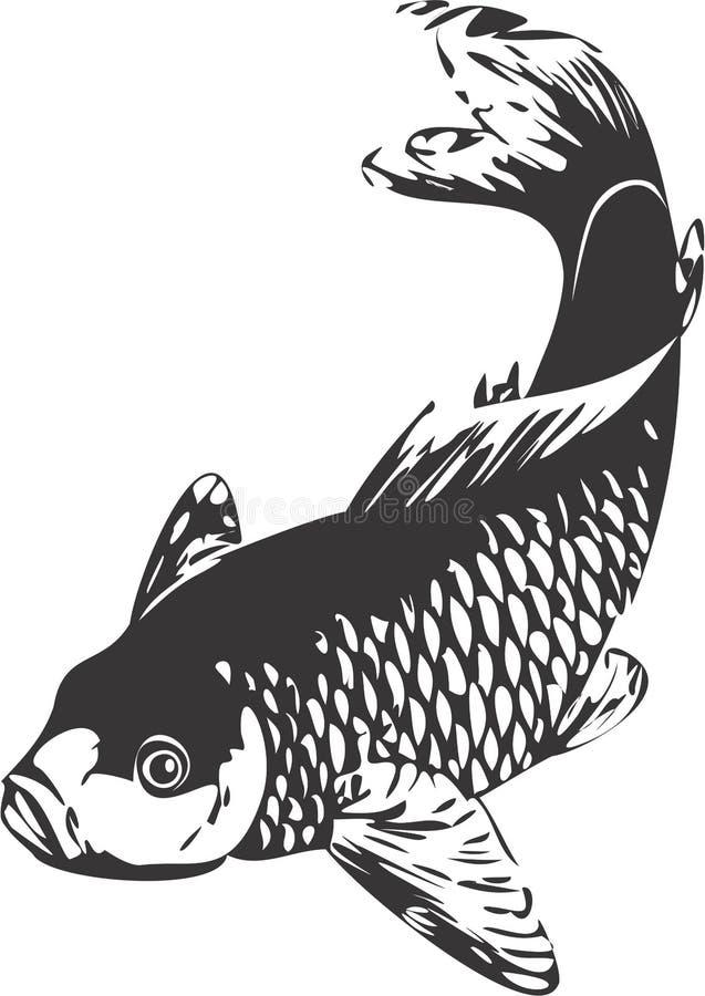 Carp stock illustration