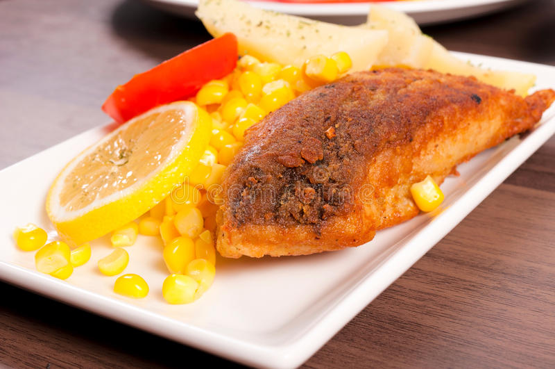 Carp fish stock photo