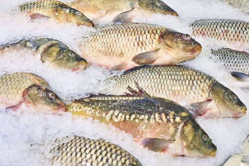Carp fish lie on ice in supermarket store. Carp fish lie on ice in a supermarket store stock photography