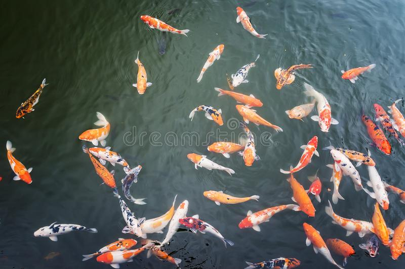 Carp fishes are swimming in the lake inside Hue Imperial which is a walled fortress and palace in the city of Hue, the former. Imperial capital of Vietnam stock photos