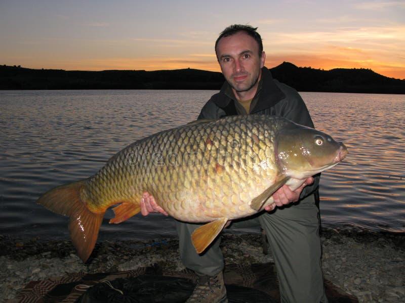 Carp fishing stock image
