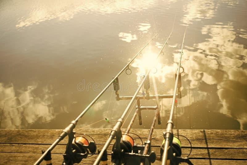 Carp fishing rods royalty free stock photo