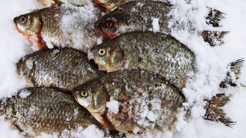 Carpa de los pescados foto de archivo