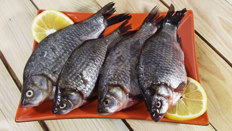 Carpa de los pescados imagen de archivo libre de regalías