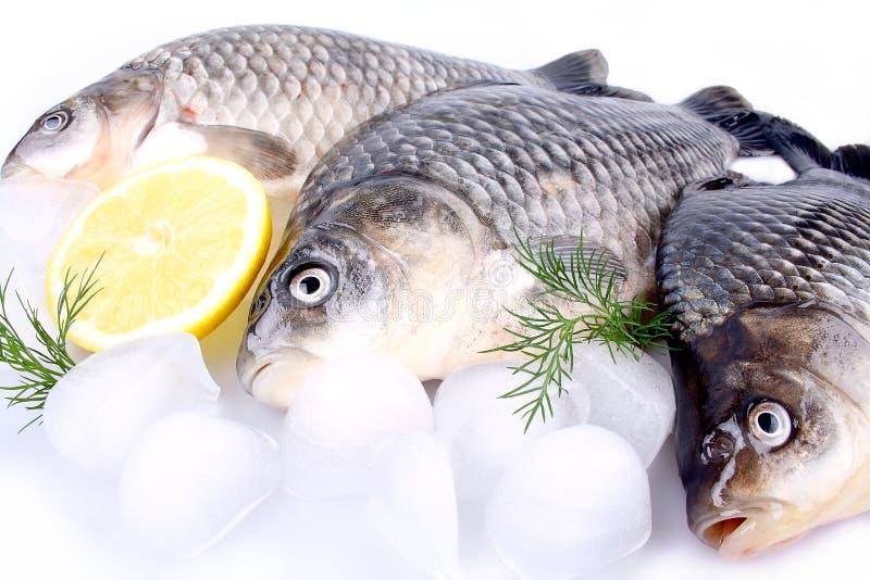 Carpa de los pescados frescos en un fondo y un hielo y un limón blancos foto de archivo libre de regalías
