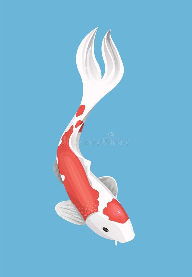 Koi cinese carpa illustrazione di stock illustrazione di for Carpa pesce rosso