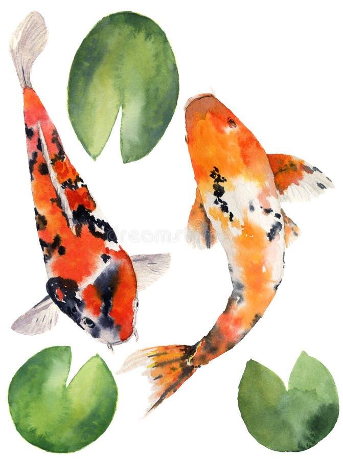 Carpa orientale dell'arcobaleno dell'acquerello con le foglie della ninfea messe Pesci di Koi isolati su fondo bianco subacqueo illustrazione vettoriale