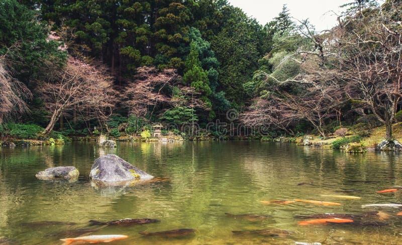 Carpas japonesas do jardim e do koi na lagoa imagem de stock