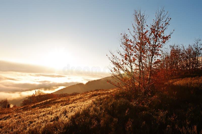 Carpat秋天trrees背景惊人的美丽如画的风景  图库摄影