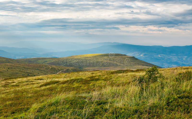 Carpathian alpine meadows in august royalty free stock images