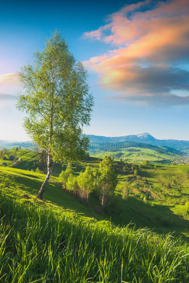 Carpathian dal för härlig vår royaltyfri fotografi