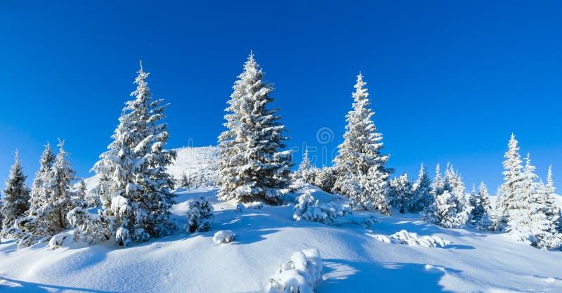 Carpathian landskap för morgonvinterberg (, Ukraina). arkivfoton