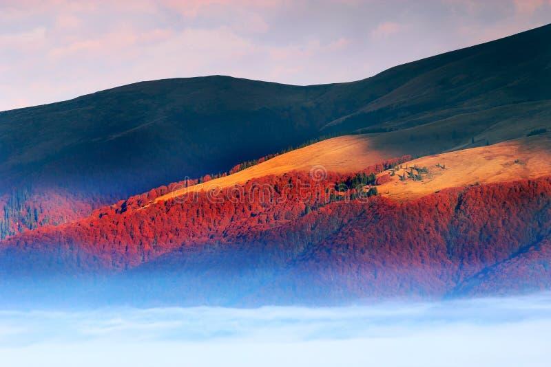 Carpathian landskap för sommar royaltyfria bilder