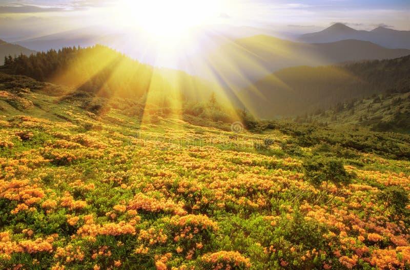 Carpathian landskap för sommar royaltyfri bild