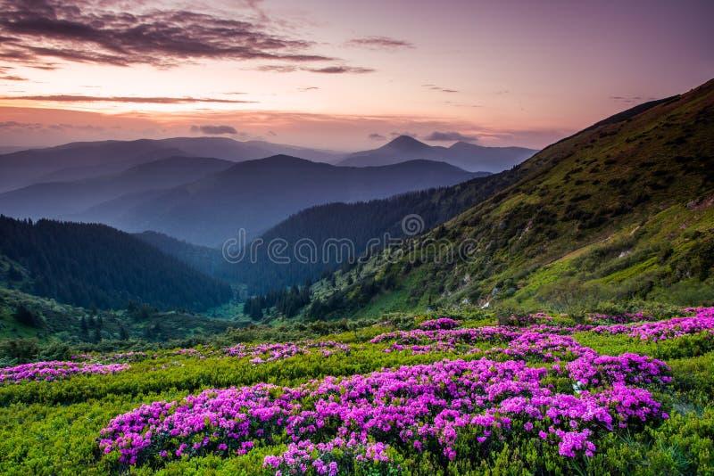Carpathian landskap för sommar arkivbild