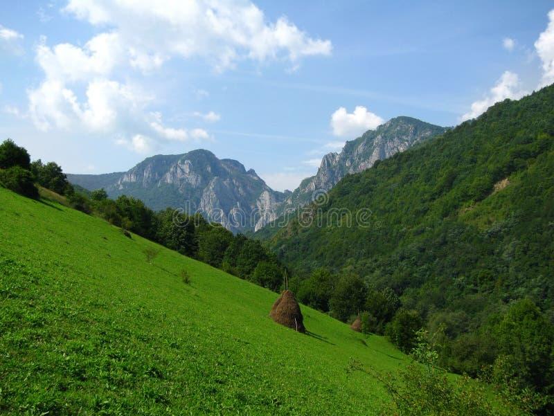Download Carpathian meadow stock image. Image of mountain, scene - 10761423