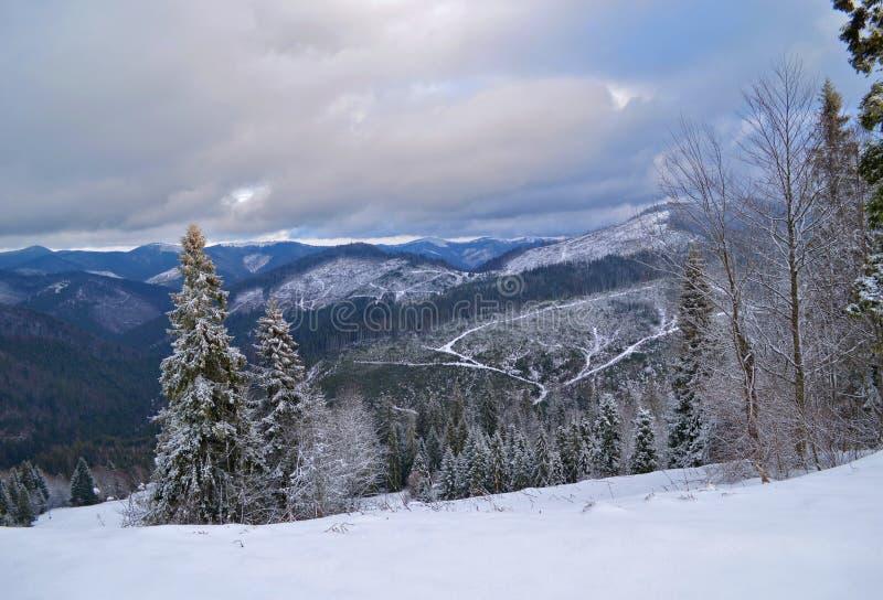 Carpathian Mountains in winter stock image