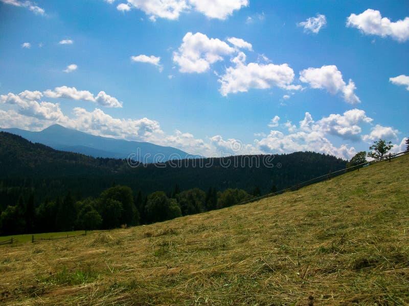 carpathian najlepszy widok góry zdjęcie stock