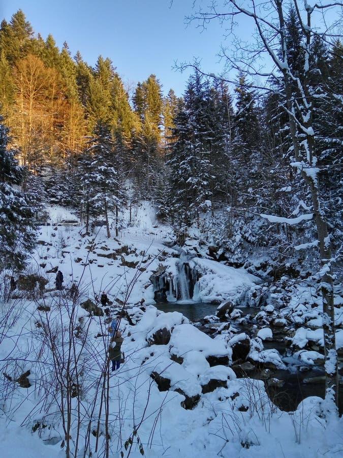 Carpathian skog, berg, flod, natur, löst liv, vinter, snö arkivbild