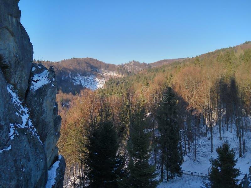 Carpathian skog, berg, flod, natur, löst liv, vinter, snö royaltyfri bild
