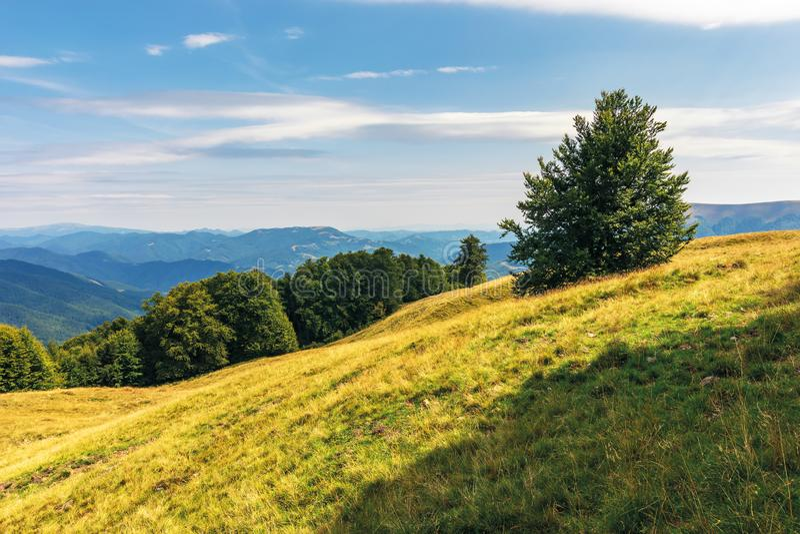 Carpathian sub alpine meadows in august royalty free stock photos