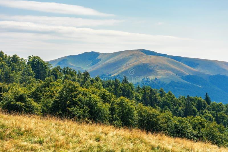 Carpathian sub alpine meadows in august stock image