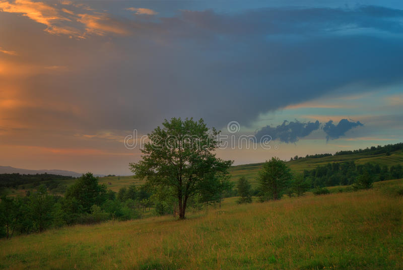 Carpathian träd på solnedgången arkivbild