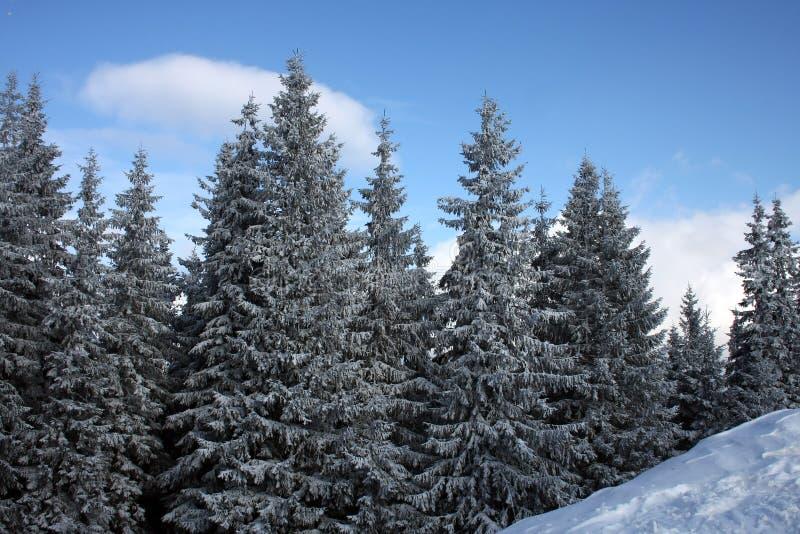 carpathians δασικός χειμώνας ήλιων &e στοκ φωτογραφία με δικαίωμα ελεύθερης χρήσης