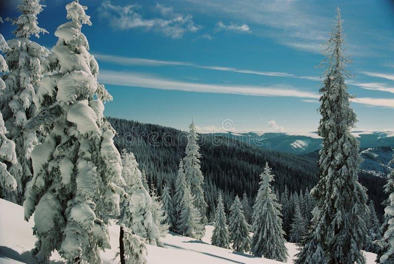 carpathians χειμώνας στοκ φωτογραφία με δικαίωμα ελεύθερης χρήσης
