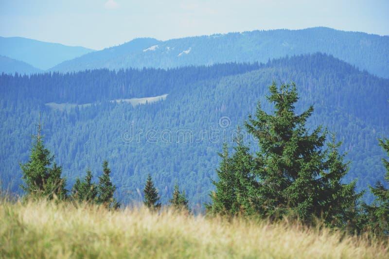carpathians royalty-vrije stock foto