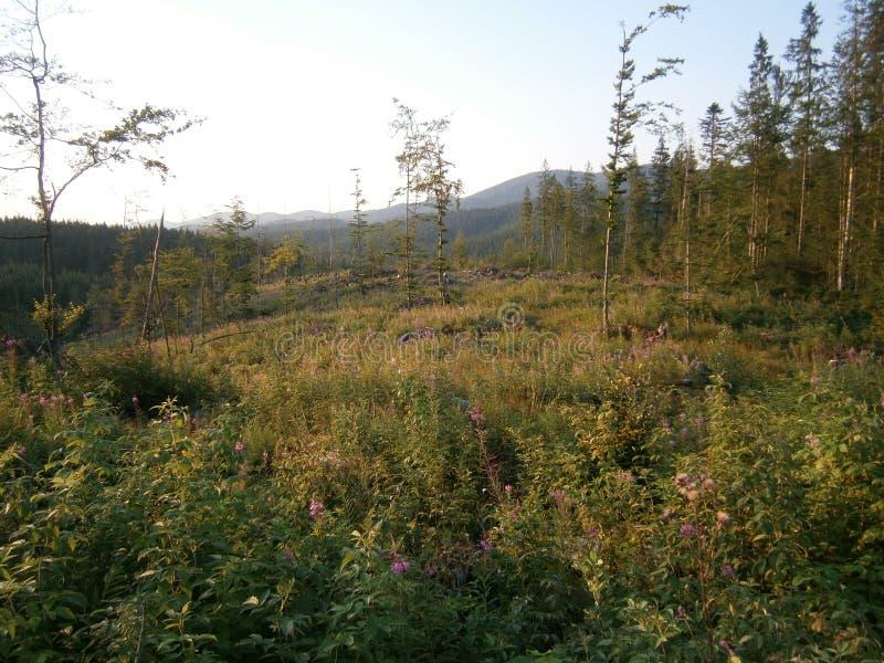 carpathians stock foto