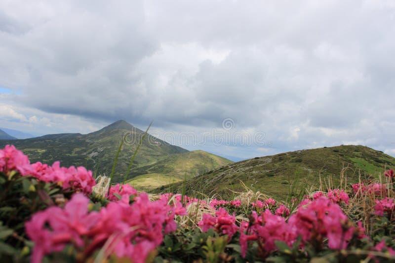 carpathians стоковая фотография rf