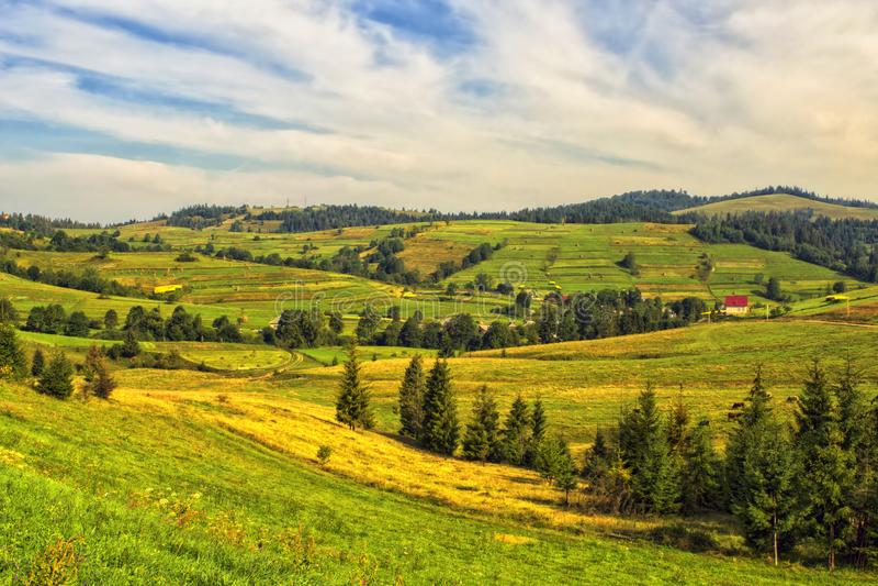 Carpathians fält i morgonen ukraine royaltyfri fotografi