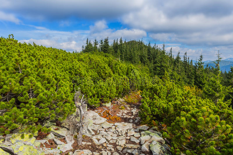 Carpathians mountain valley scene royalty free stock image