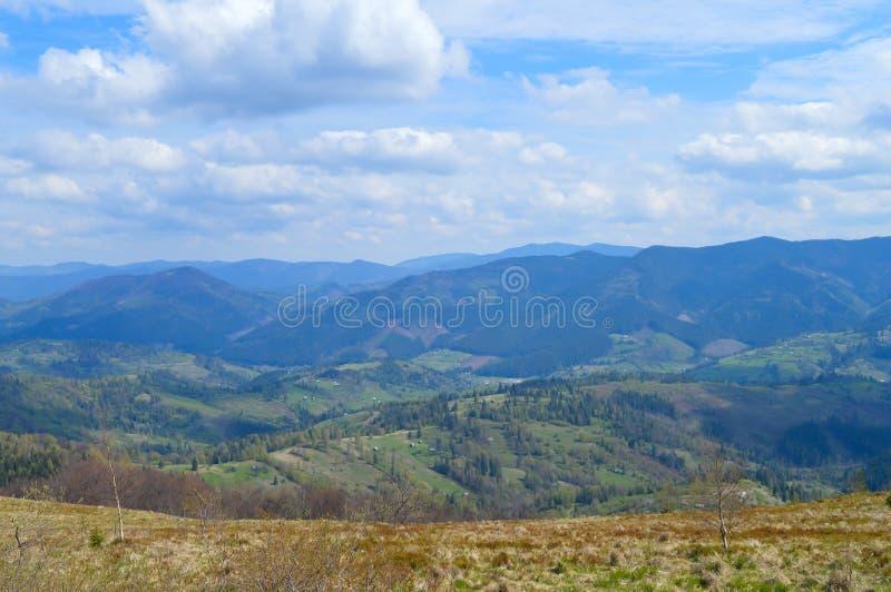 Carpathians skog i Maj royaltyfri fotografi