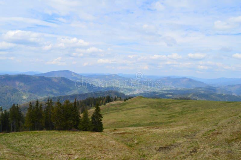 Carpathians skog i Maj royaltyfria bilder