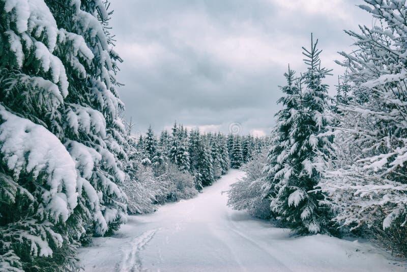 carpathians vinter arkivbilder