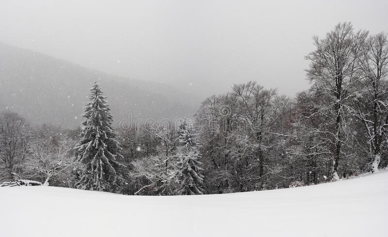 Carpathians in winter stock images
