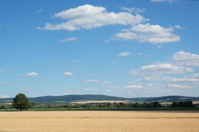 Carpathien blanc, Moravie, République Tchèque photo stock