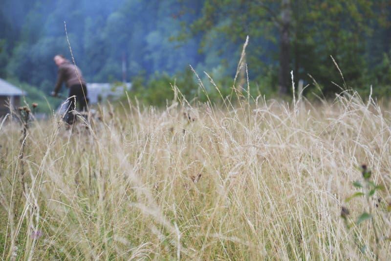 carpathiens photos libres de droits